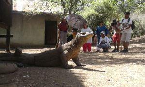 Tours To Komodo